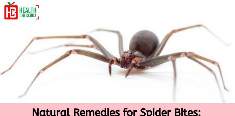 Natural remedies for spider bites