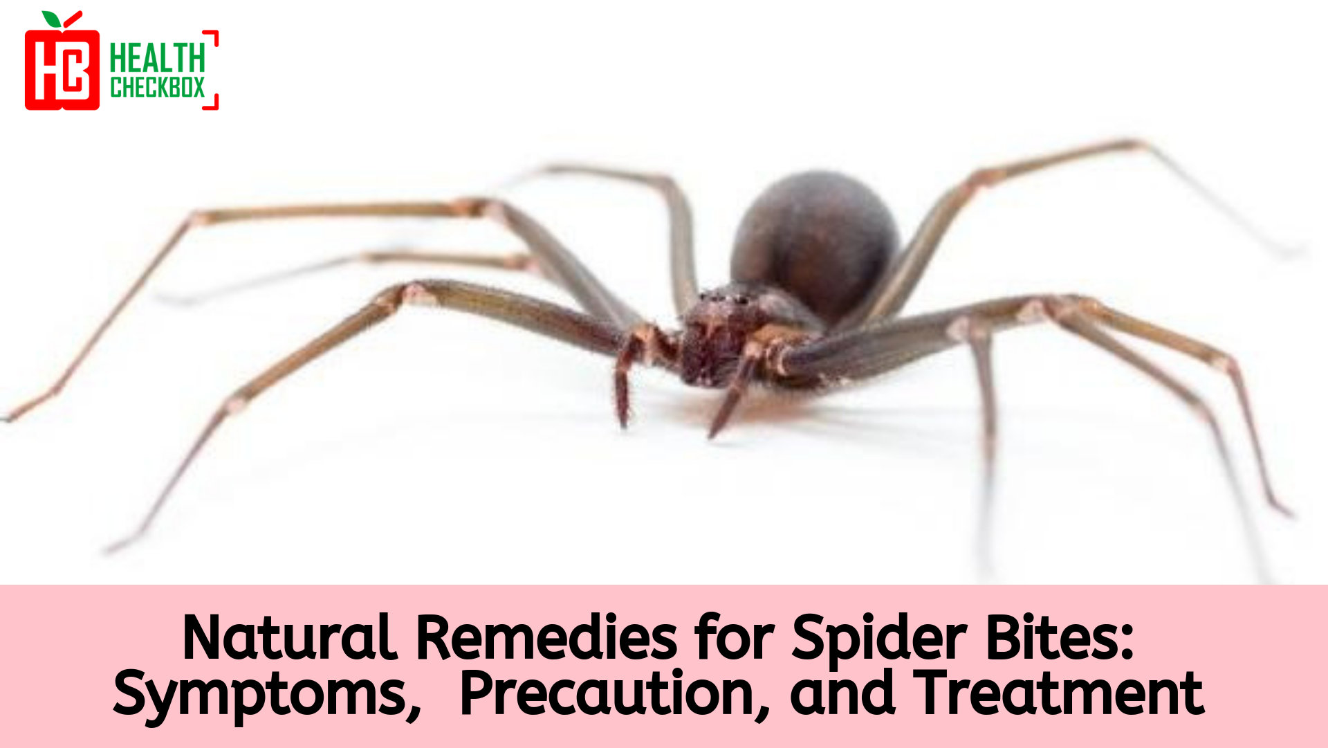 Natural remedies for spider bites
